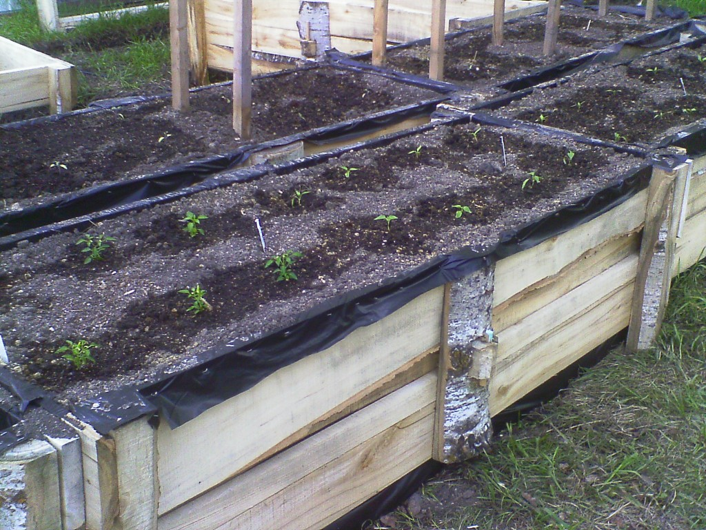Our new wheelchair accessible planting beds