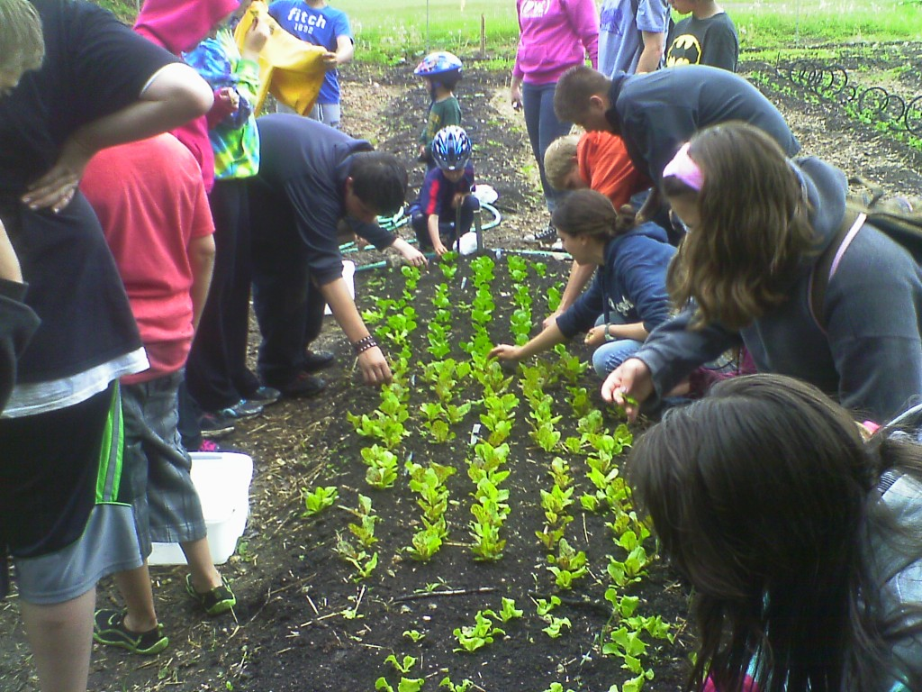In week 2 campers are enjoying a salad harvest after their work projects are all done.