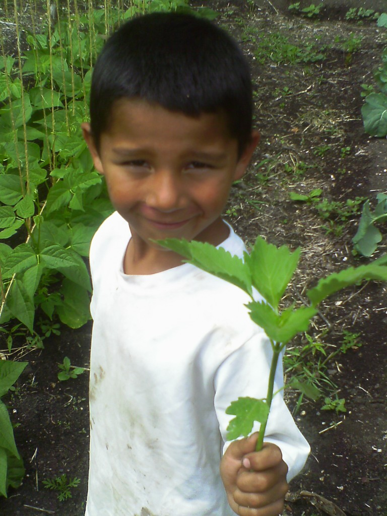 All campers get the chance to lend a hand in keeping our plants alive.  This camper had so much fun weeding!